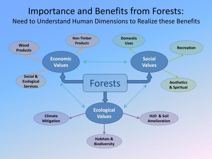 Importance and Benefits from Forests: