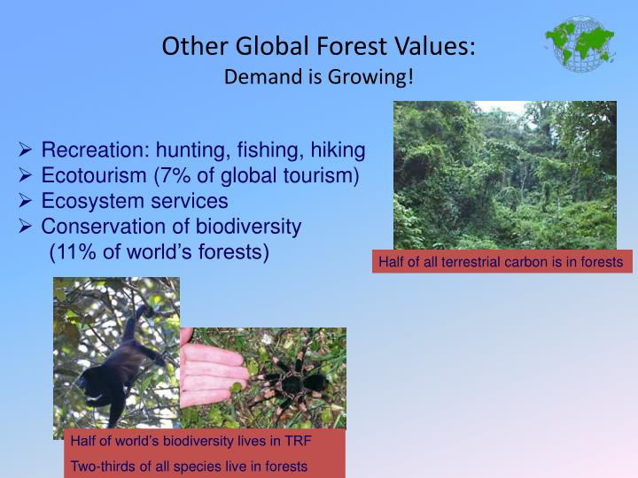 Half of all terrestrial carbon is in forests