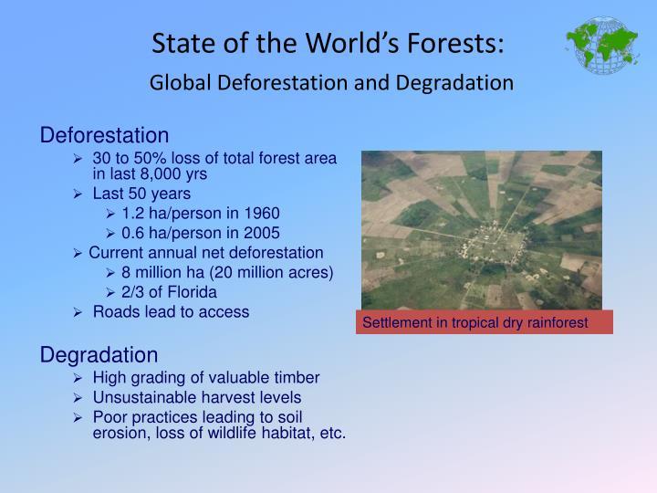Settlement in tropical dry rainforest