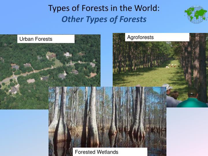 Agroforests