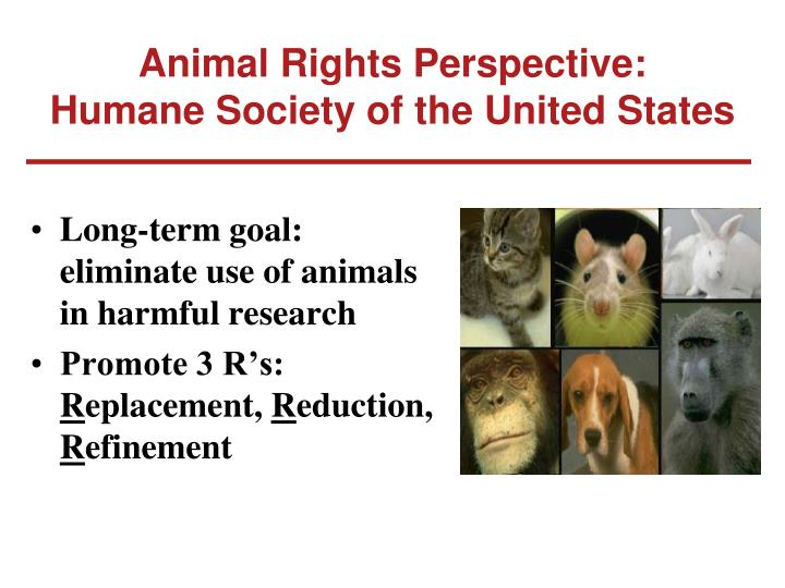 Animal Rights Perspective: