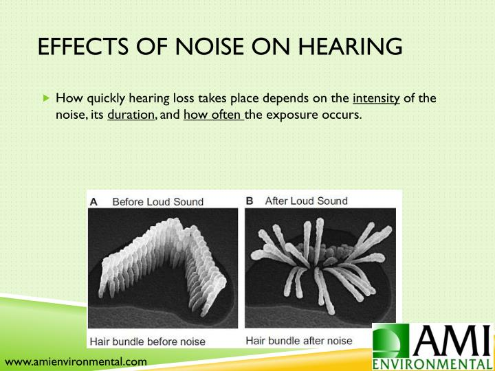 Effects of Noise on Hearing
