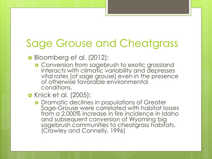 Sage Grouse and