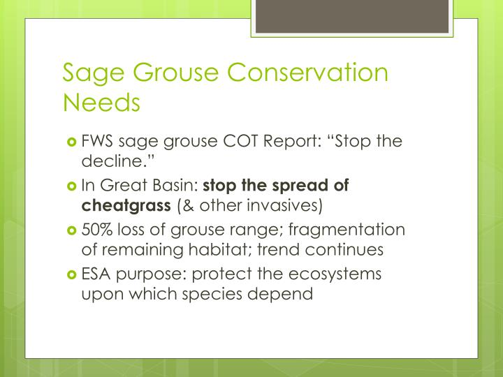 Sage grouse conservation needs