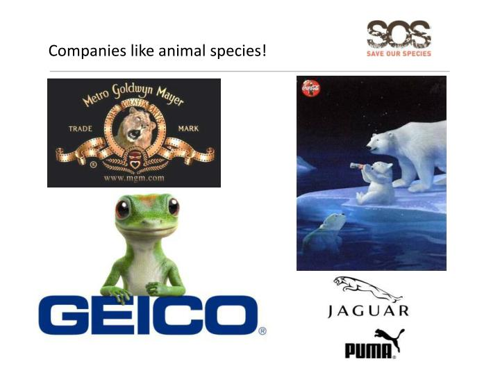 Companies like animal species!
