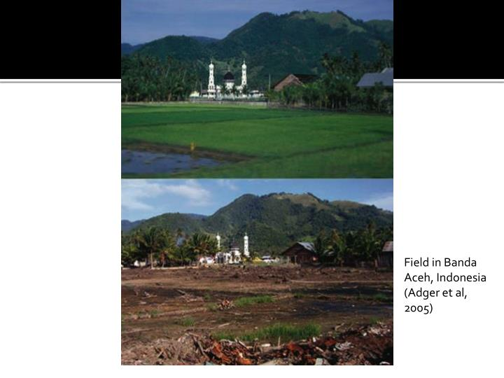 Field in Banda Aceh, Indonesia (Adger et al, 2005)