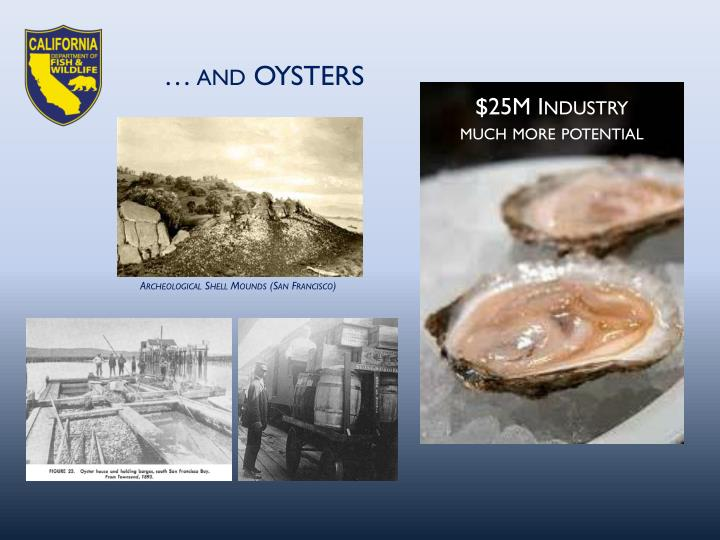 … and OYSTERS