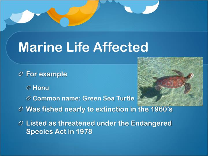 Marine Life Affected
