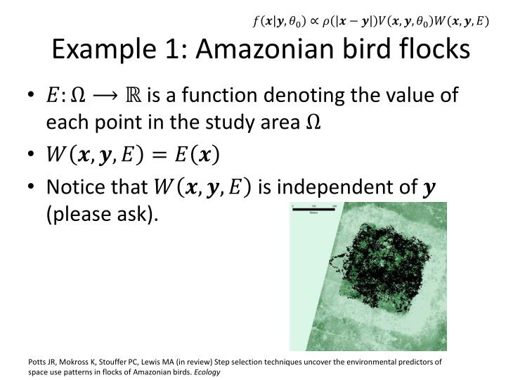 Example 1: Amazonian bird flocks