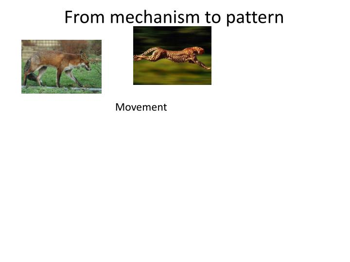 From mechanism to pattern