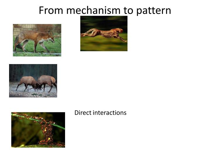 From mechanism to pattern1