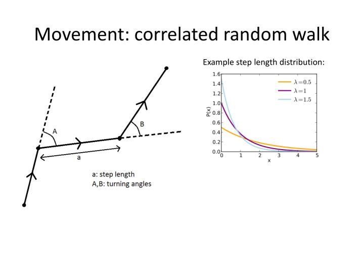 Movement: correlated random walk