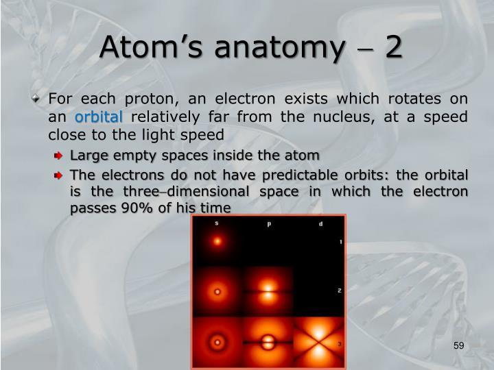 Atom's anatomy