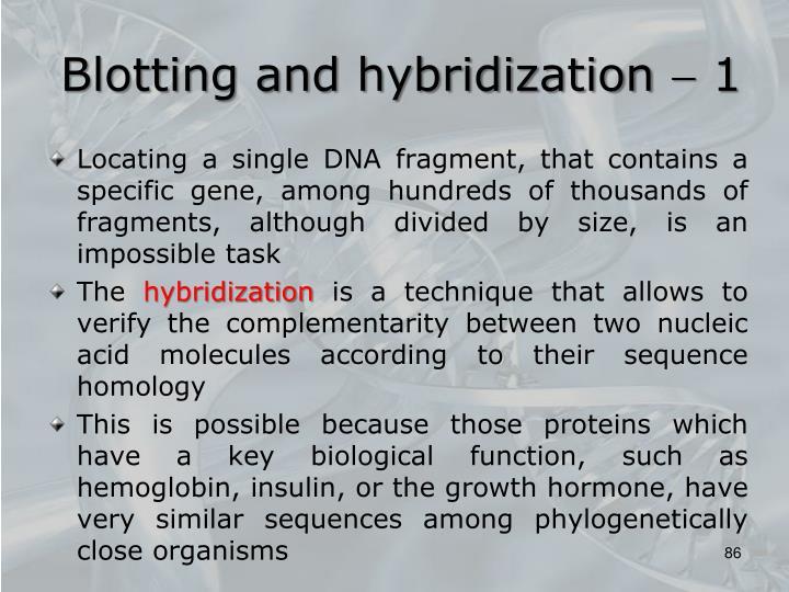 Blotting and hybridization  1