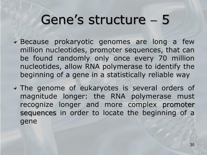 Gene's structure  5