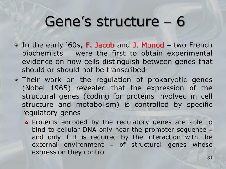 Gene's structure  6