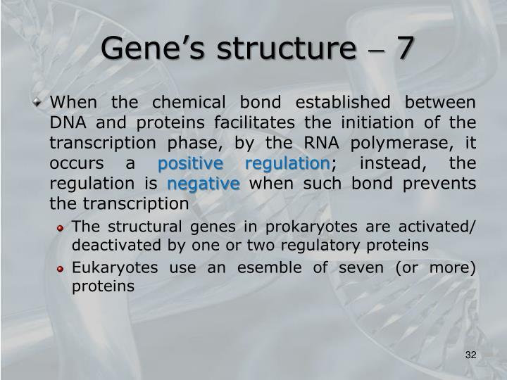 Gene's structure  7