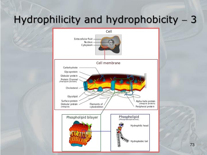 Hydrophilicity and hydrophobicity