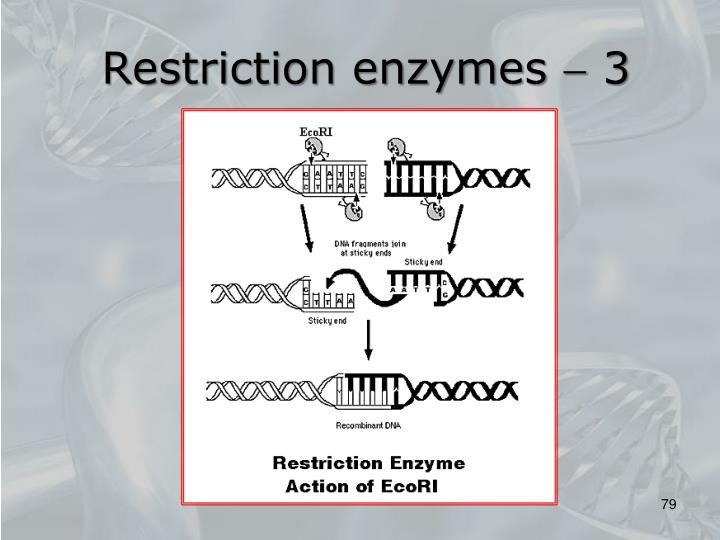 Restriction enzymes  3