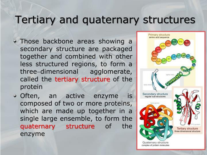 Tertiary and quaternary structures