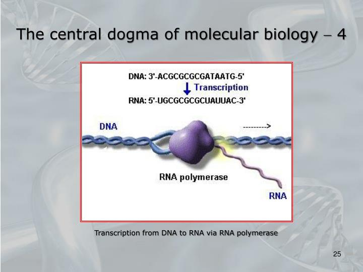 The central dogma of molecular biology