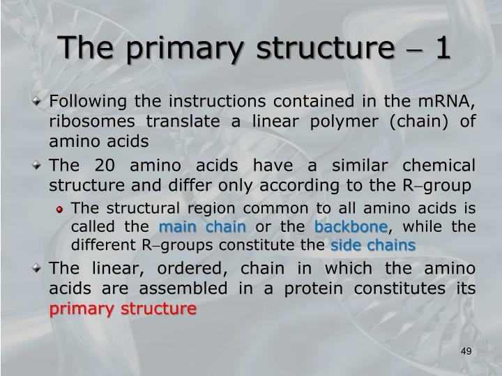 The primary structure
