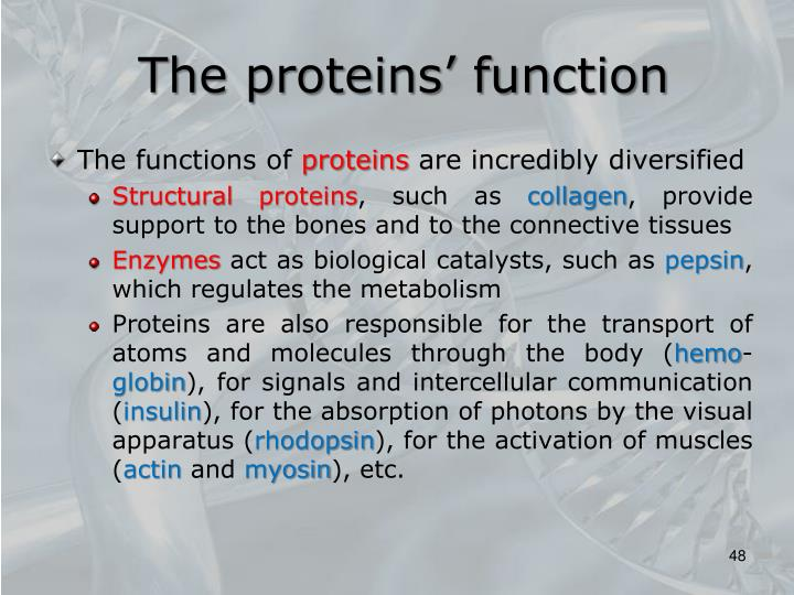 The proteins' function
