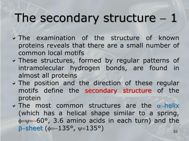 The secondary structure