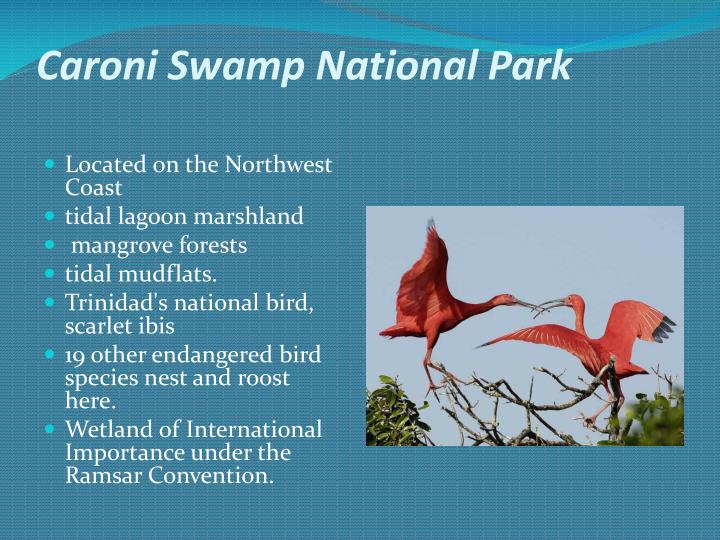 Caroni Swamp National Park