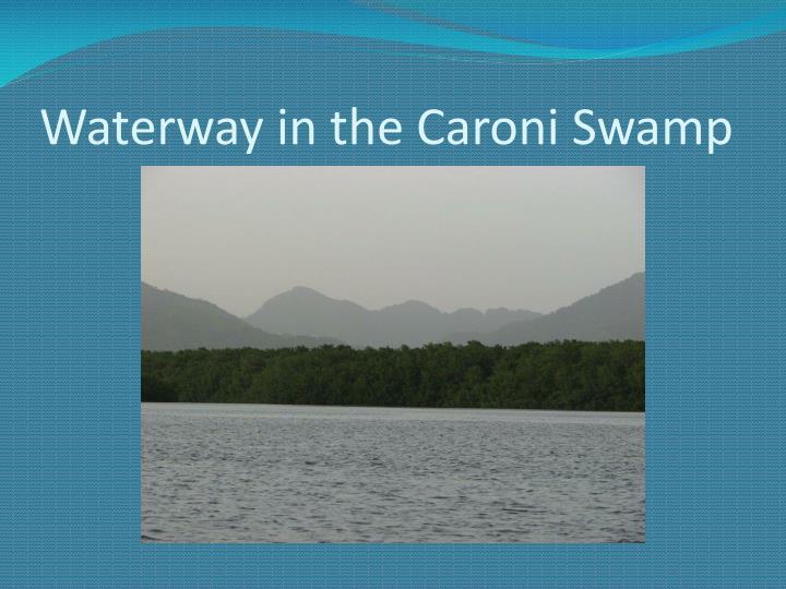 Waterway in the Caroni Swamp