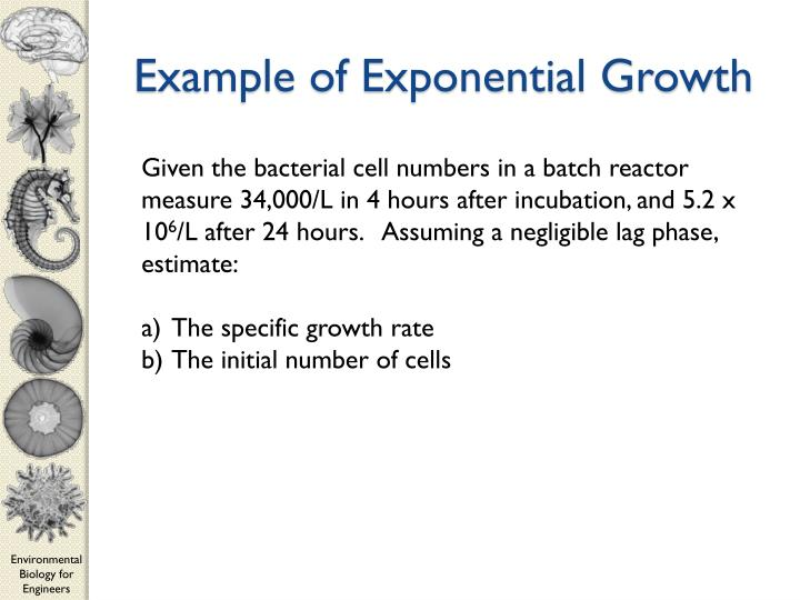 Example of Exponential Growth
