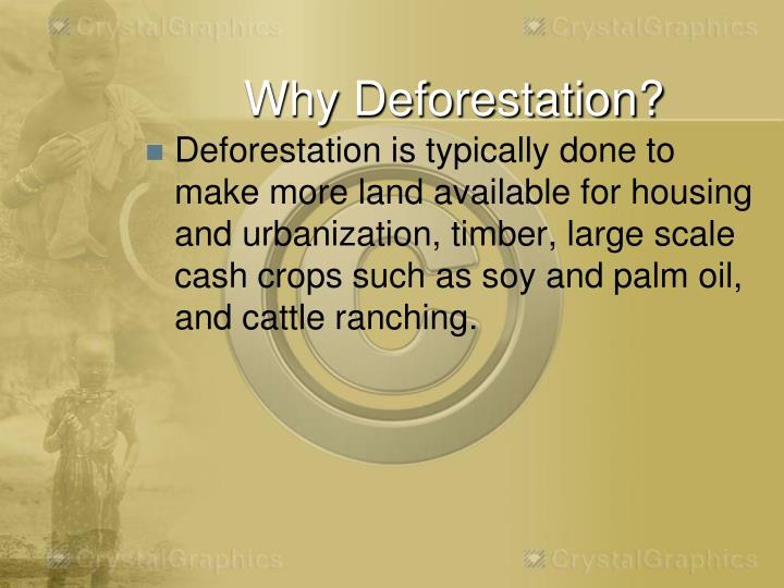 Why Deforestation?