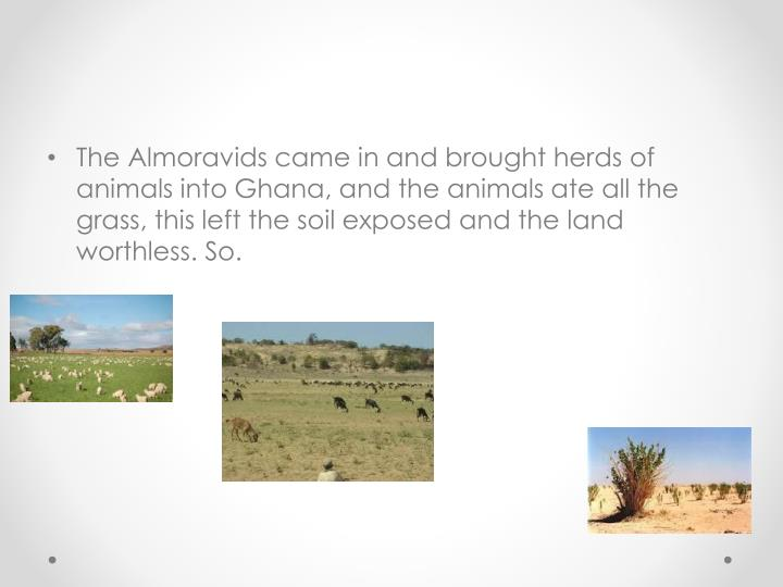The Almoravids came in and brought herds of animals into Ghana, and the animals ate all the grass, this left the soil exposed and the land worthless. So.
