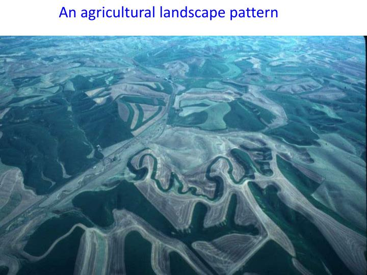An agricultural landscape pattern