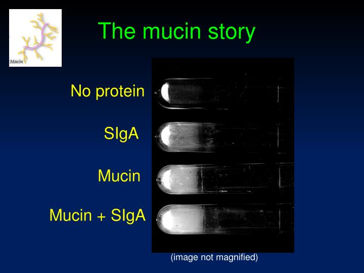 The mucin story