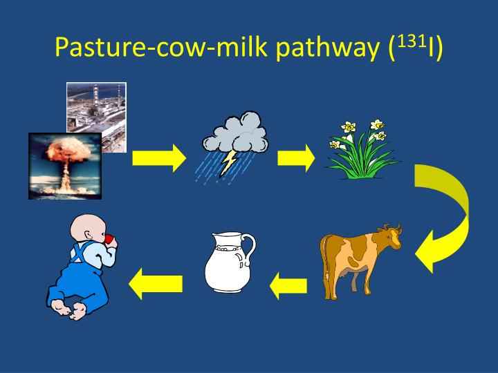 Pasture-cow-milk pathway (