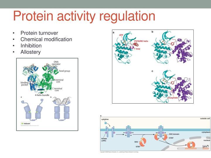 Protein activity regulation