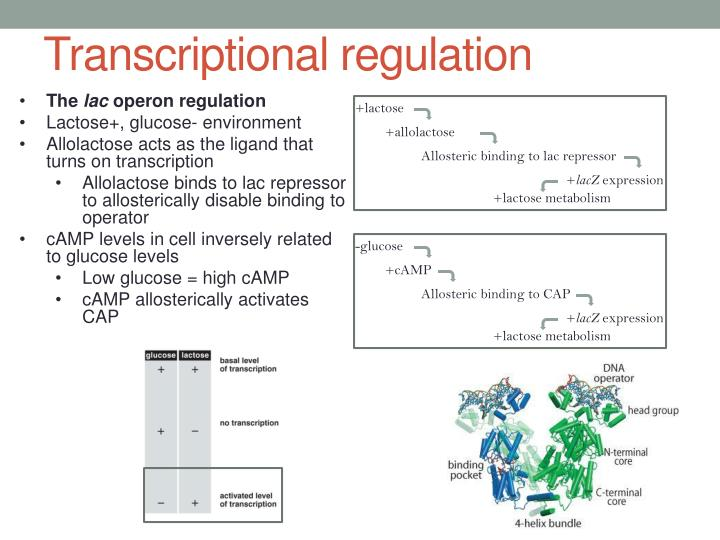Transcriptional regulation