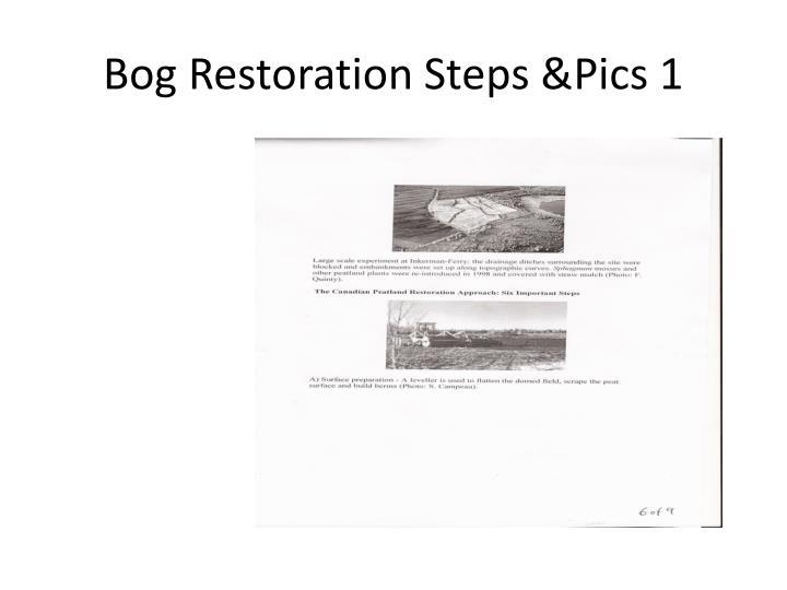 Bog Restoration Steps &Pics 1