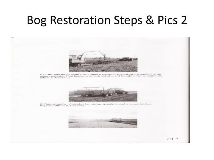 Bog Restoration Steps & Pics 2