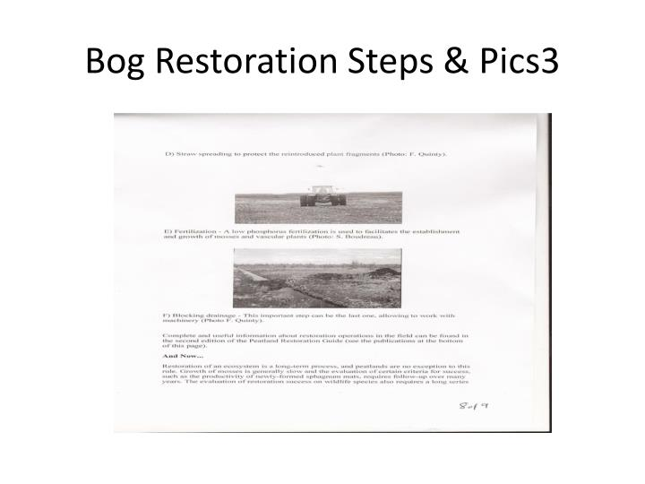 Bog Restoration Steps & Pics3