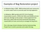 examples of bog restoration project