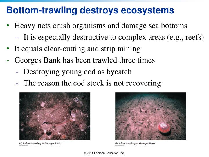 Bottom-trawling destroys ecosystems