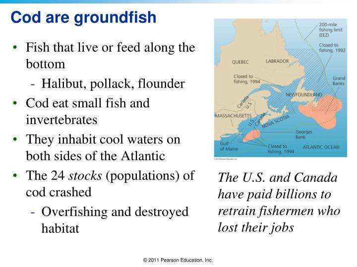 Cod are groundfish