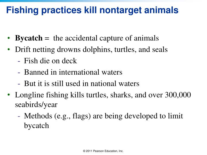 Fishing practices kill nontarget animals