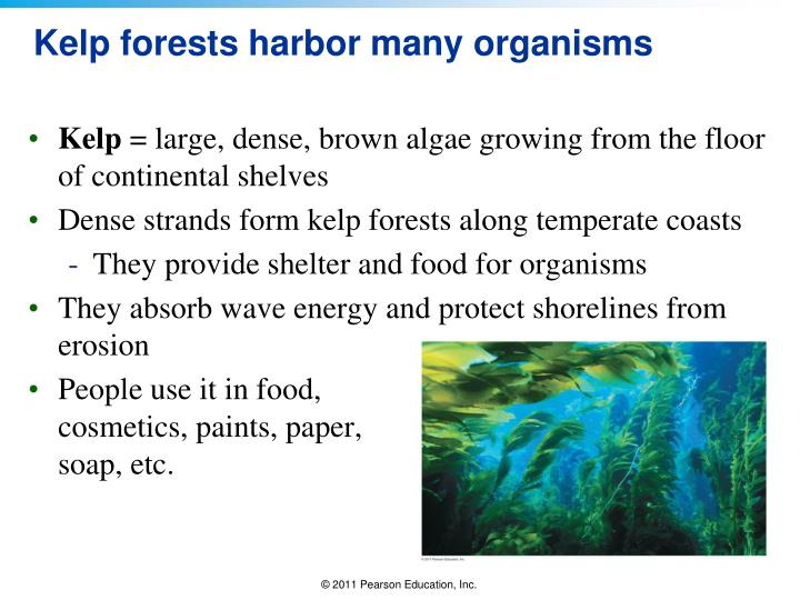 Kelp forests harbor many organisms