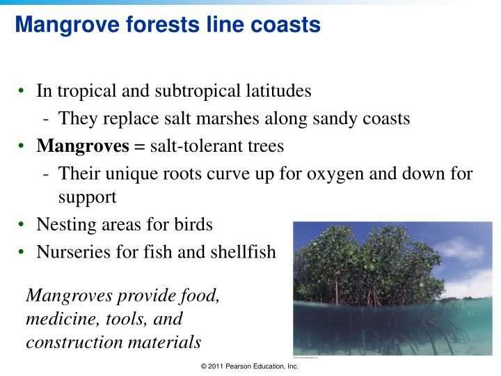 Mangrove forests line coasts