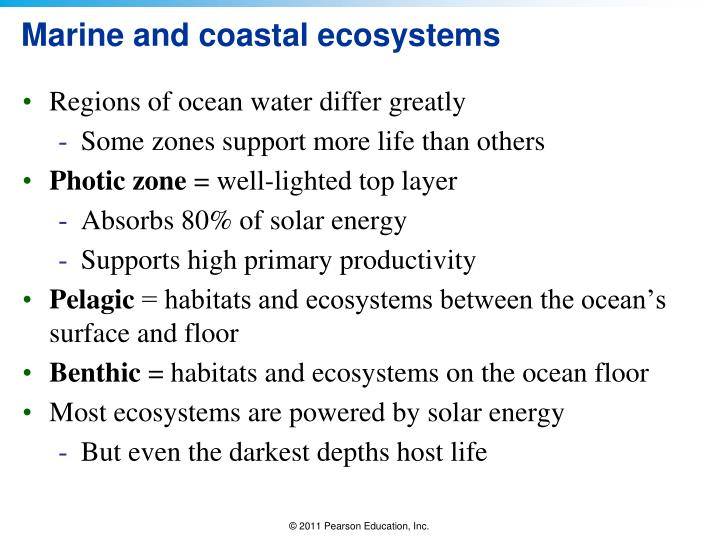 Marine and coastal ecosystems