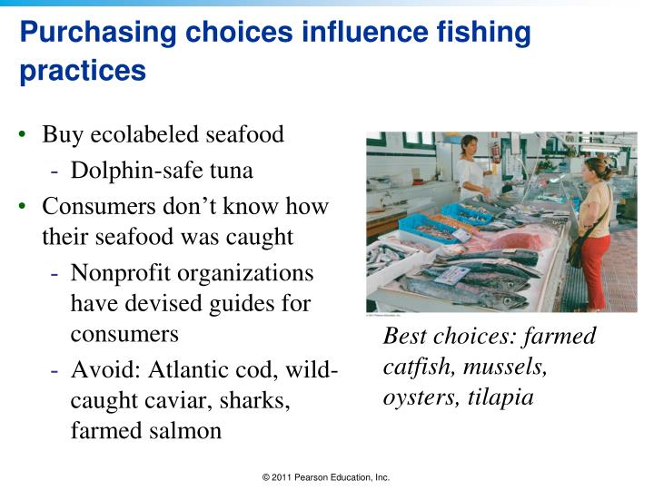 Purchasing choices influence fishing practices