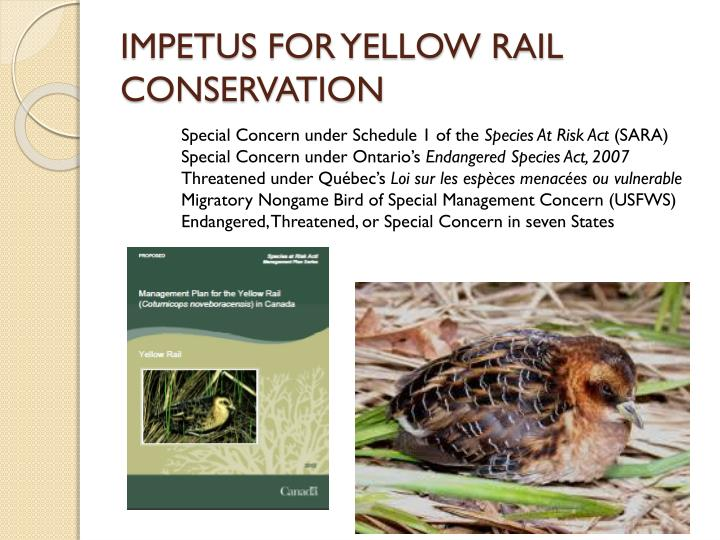 Impetus for yellow rail conservation